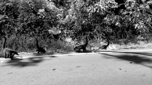 animals nature asphalt wild park wildlife road grass animal tree