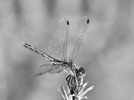 bug dragonfly insect close macro nature arthropod lacewing outdoors invertebrate insects drone  bugs advantage solution offers head