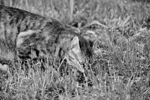 cat grass green domestic kitten cute curious feline fur nature