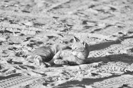 cat kitten yellow sunshine orange domestic fur feline kitty pet cats