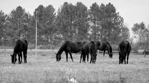 grazing horses animals grassland ranch rural meadow brown light farm grass livestock horse field wildlife animal forest pony