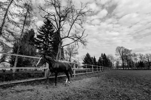 horses farm cavalry rural ranch resort animal grass mare horse