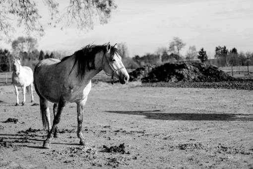 horses stallion livestock animal equine ranch grass horse farm