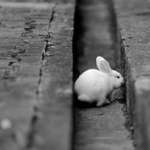 rabbit rodent albino bunny pet grass fur nature animal cute
