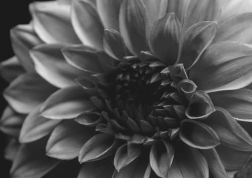abstract  beautiful  beauty  black  bloom
