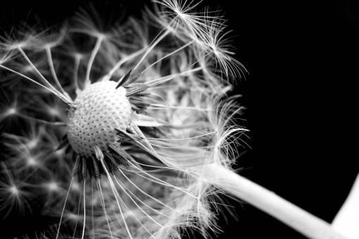 blossom  black and white  bloom  umbrella