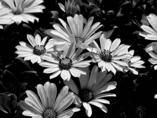 flower brown horticulture garden yellow nature daisy yellowish sunflower flora leaf flowers
