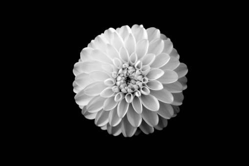 flower  petal  pollen  yellow  circle