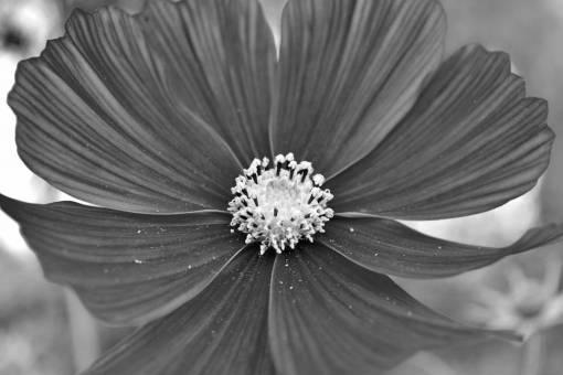 flower summer daisy nature garden plant bright flowers petals vegetation flora petal season