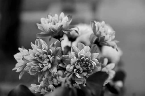 flowers leaf pinkish elegance bouquet flower shrub petal plant nature