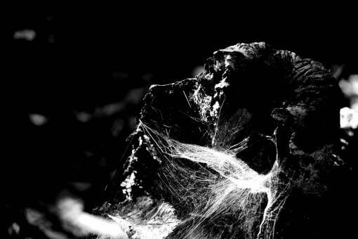light  black and white  flower  darkness