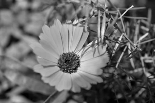 meadow flower bright garden daisy flora plant petal blossom
