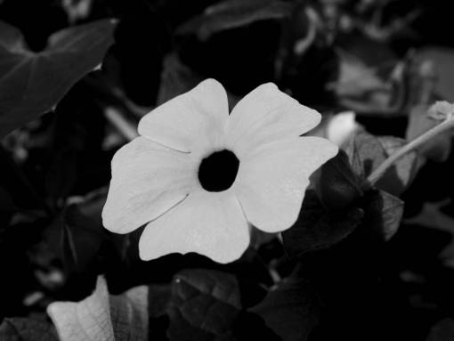 nature  blossom  hole  flower  petal  bloom
