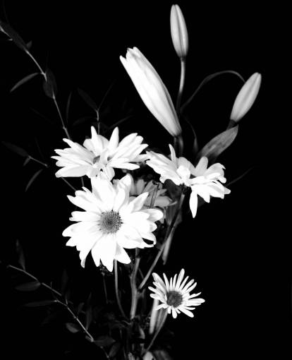 nature  branch  blossom  black and white