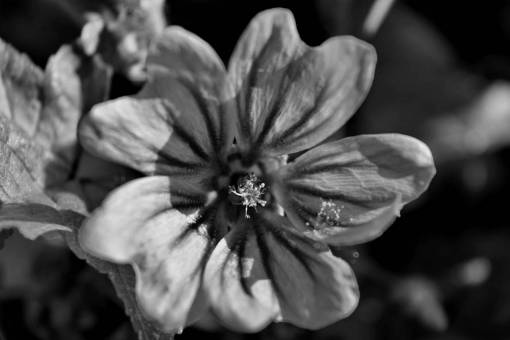 pistil flower plant shrub leaf flora garden nature  plants
