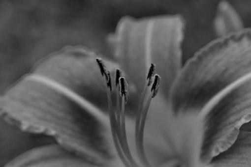 pistil lily plant flower pollen garden spring bloom nature summer