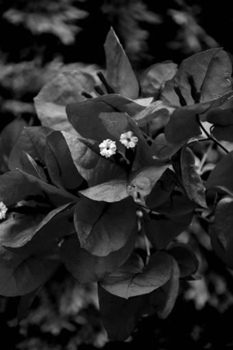 reddish flower flowers leaves branches garden plant petal shrub
