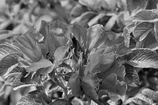 spring flower bud weather roses bloom leaf blossom fair garden wildflower flora flowers