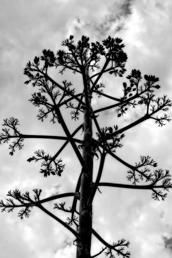 tree  nature  branch  cloud  black and white