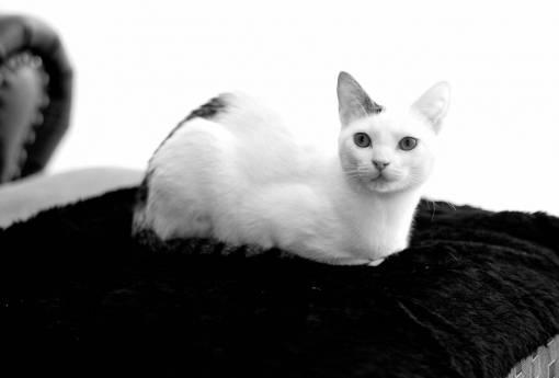 animal  cute  pet  portrait  kitten  feline