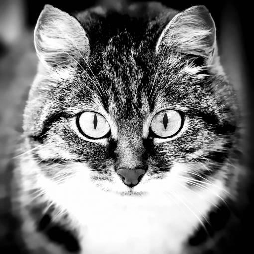 animal  pet  portrait  close up  nose