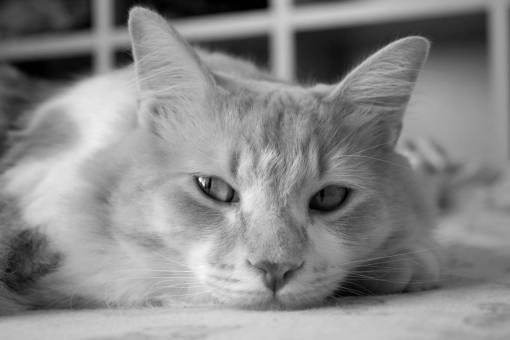 animal  pet  portrait  kitten  close up