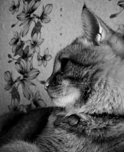 animal  pet  portrait  kitten  feline  fauna