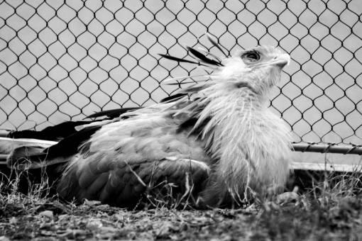animal portrait  avian  beak  bird  cage