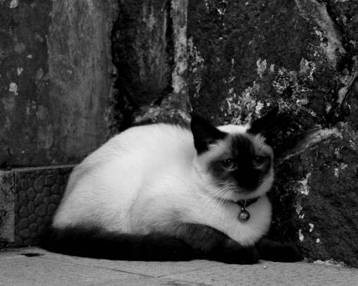 animal portrait  cat face  close up