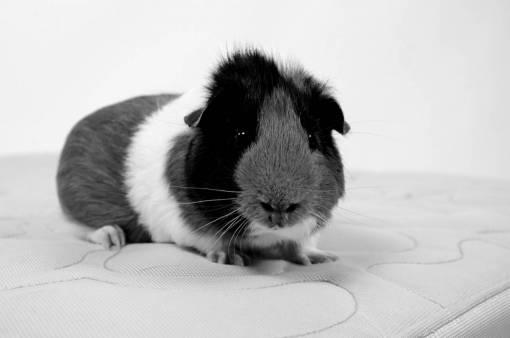 animal  portrait  mammal  rodent  fauna