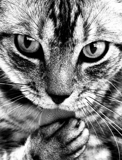 black and white  animal  cute  pet  portrait