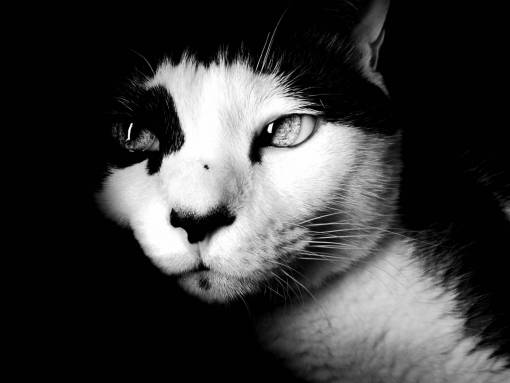 black and white  animal  looking  pet