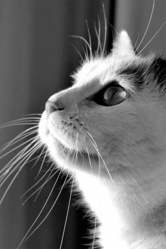 black and white  animal  pet  fur  portrait