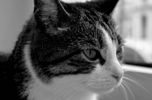 black and white  cute  pet  close up  nose