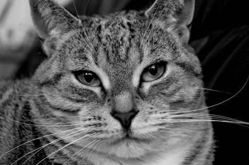 black and white  cute  pet  fur  fauna