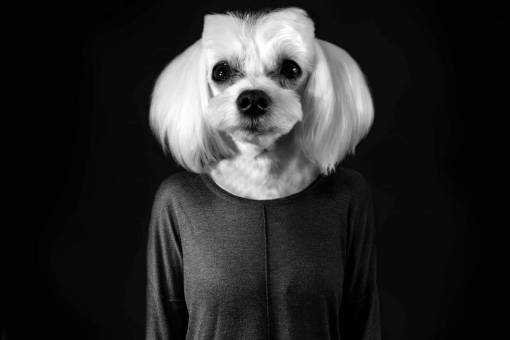 black and white  cute  pet  pets  animals