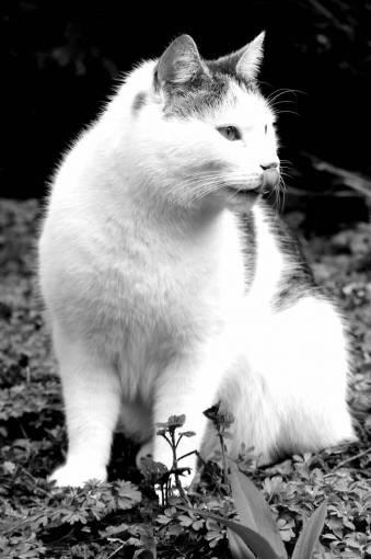 black and white  sweet  animal  pet  fur