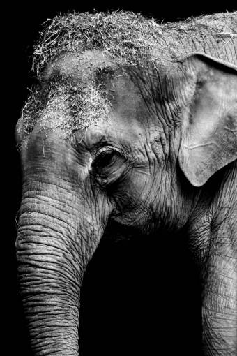 black and white  texture  trunk  old  animal
