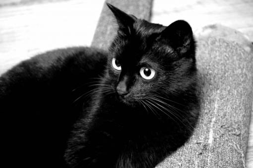 black and white  view  animal  cute  pet