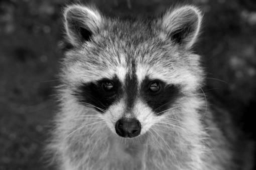 cute  looking  wildlife  portrait  macro
