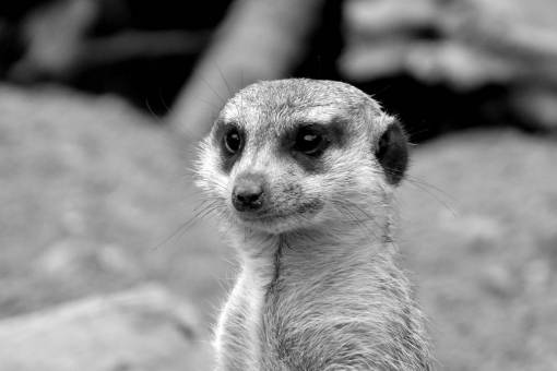 cute  wildlife  zoo  mammal  fauna  close up
