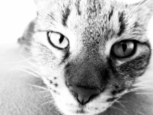 nature  black and white  animal  portrait