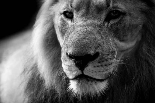 nature  black and white  wildlife  zoo  fur
