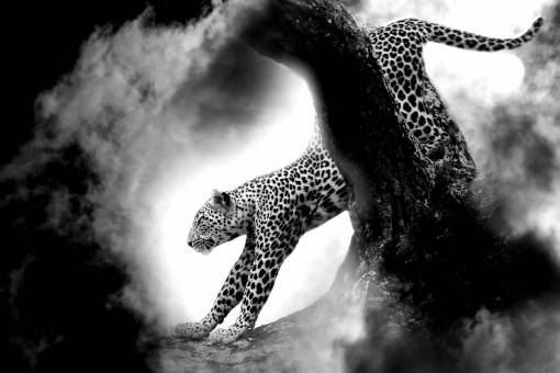 nature  cloud  black and white  wildlife