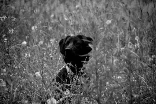 nature  grass  black and white  domestic
