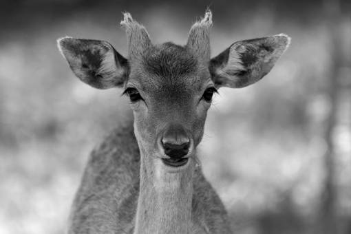 nature  wildlife  mammal  fauna  wild animal