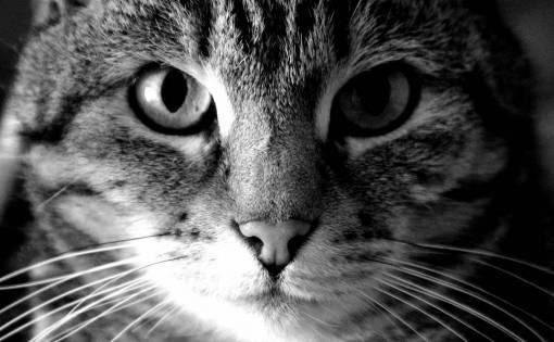 view  pet  portrait  fauna  close up  nose