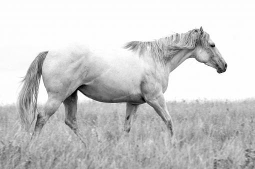 white  prairie  animal  portrait  herd