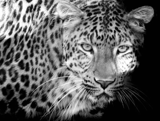wildlife  wild  predator  close  fauna
