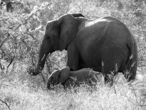 adventure  africa  mammal  national park